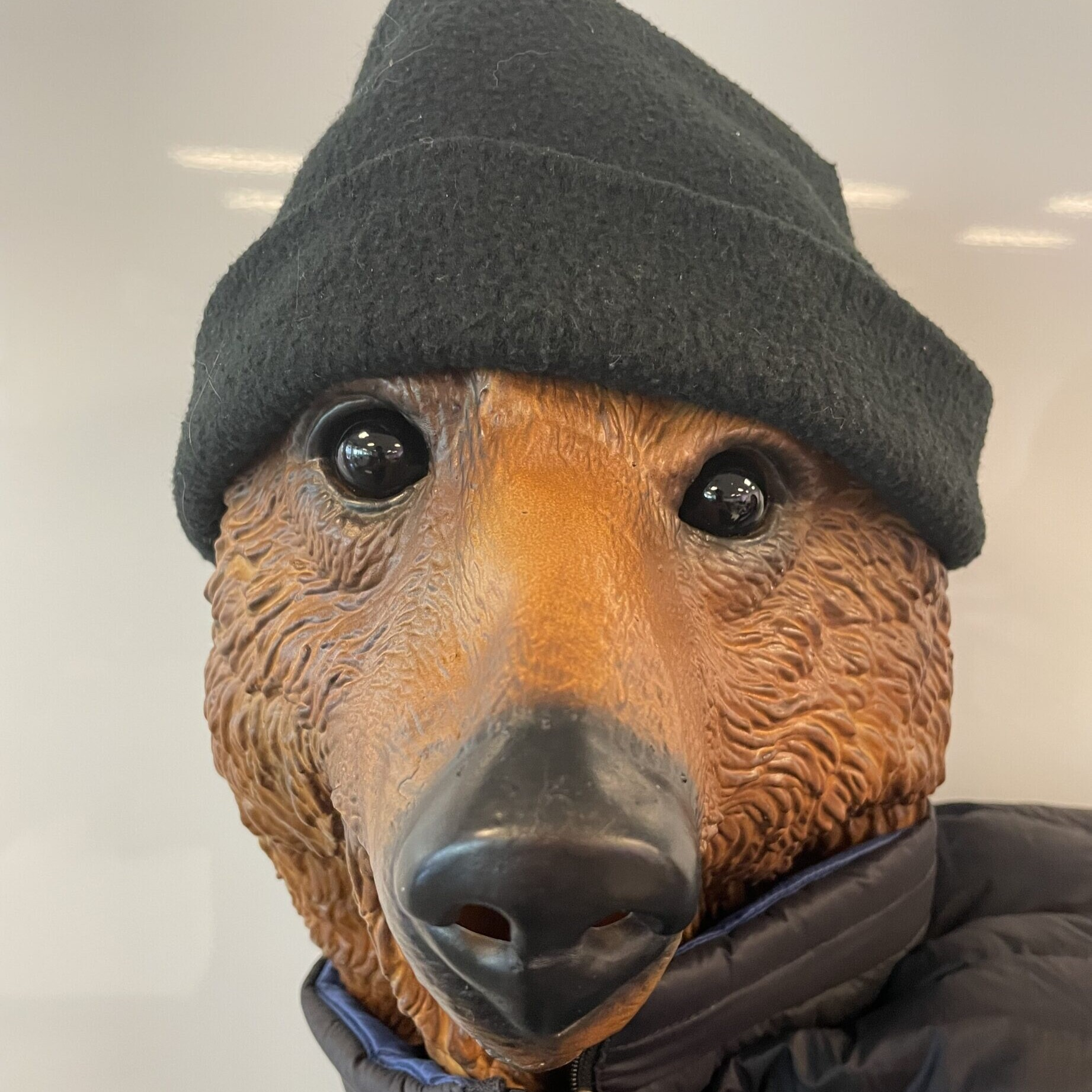 A bear wearing a beany