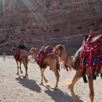 Camels in front of The Theater in Petra