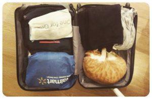 kedi ile yurt disina tasinmak