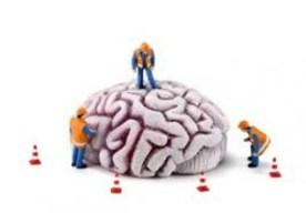 Brain-Under-Construction
