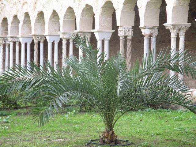 Garten der Apokalypse mit einer Dattelpalme