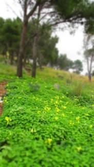 Saftiges Grün und Gelb