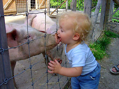 pig and kid share big, sloppy kiss
