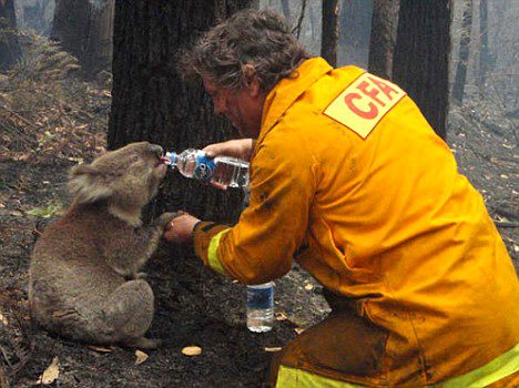 koala bear and firefighter