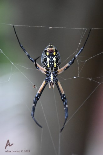 Garden spider and spinnerets