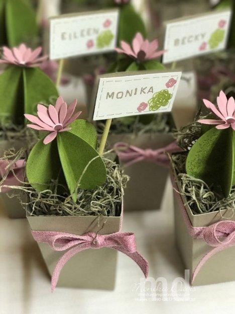 spring-retreat-cactus