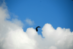 5. Great Blue Soaring | 1:52:34 pm