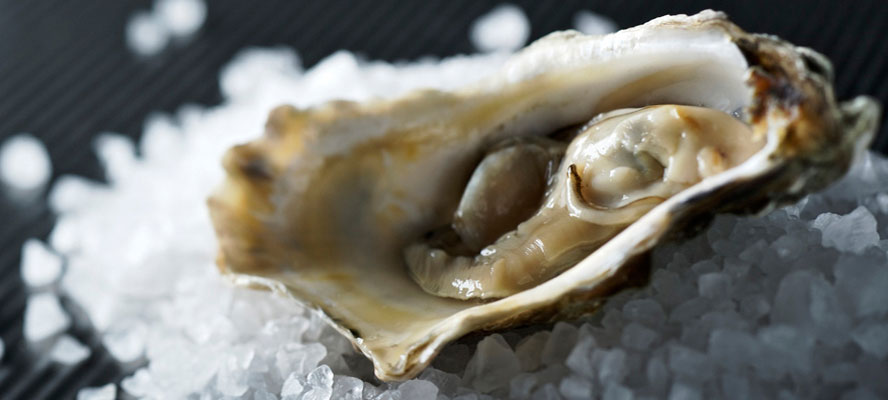 oyster-12939661