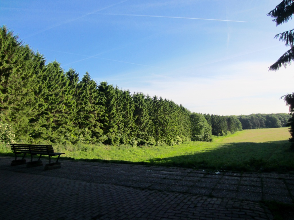 Amsterdam Forest 2