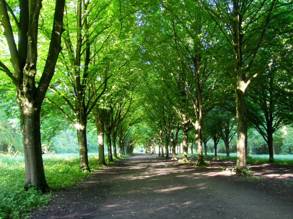 Amsterdam Forest 3