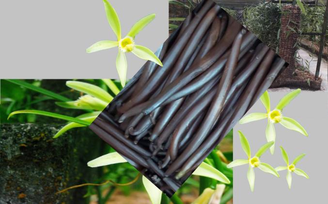 Sachet de vanille de Raiatea 1 kg (- de 16 cm)