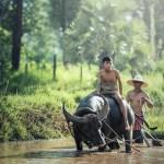 Cómo moverse por Camboya
