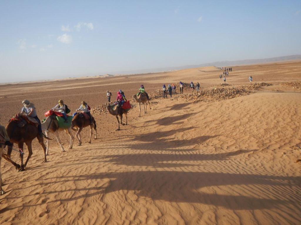 dromedarios en el Desierto del Sahara