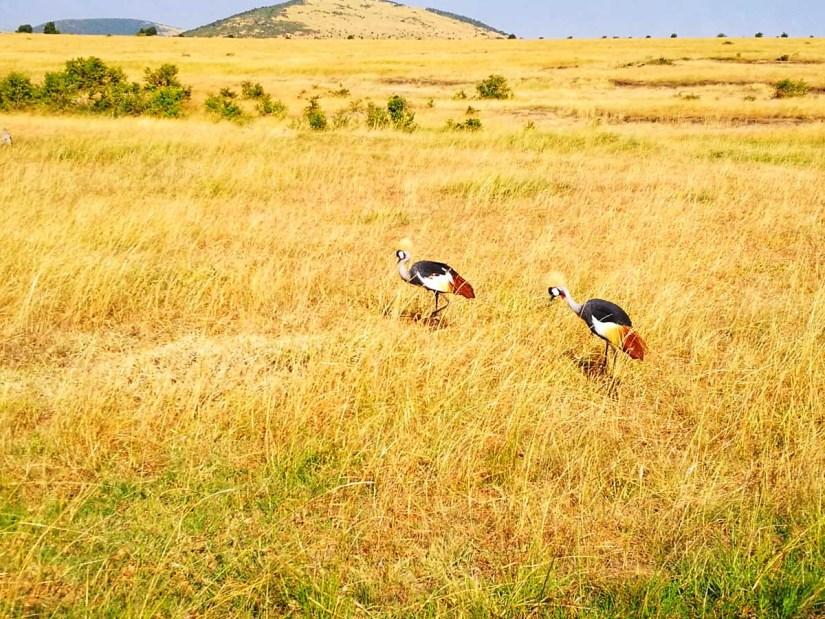 Aves exoticas en Africa