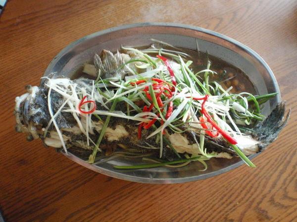 草地狀元 -iSET三立官方網站- » Blog Archive » 媽呀這是什麼魚呀?