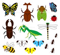 『虫』が大好きだった昔の私。