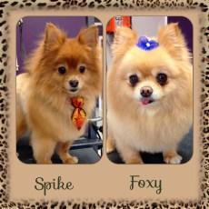 FOXY & SPIKE