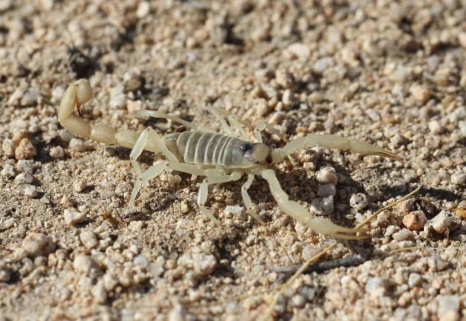 House Scorpion Az Phoenix