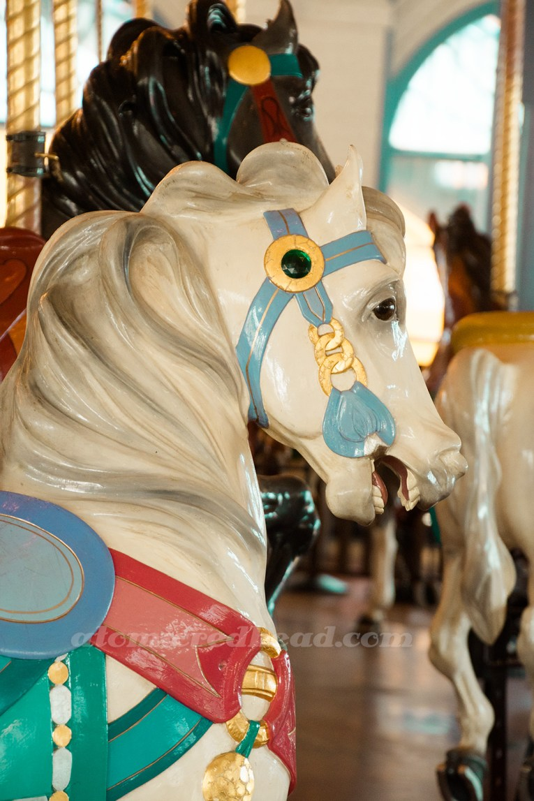 Close-up for a white horse with blue and gold bridal.