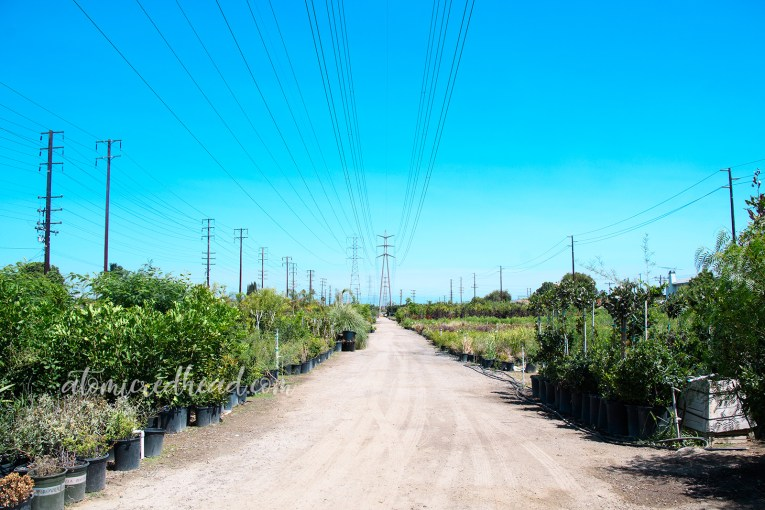 Plants until the horizon line with power lines extending overhead.