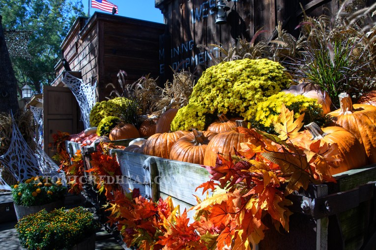 Pumpkins and fall leaves sit in the cars of an old train.