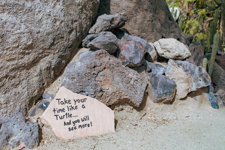 "A stone, etched with the words ""Take your time like a turtle...and you will see more!"""