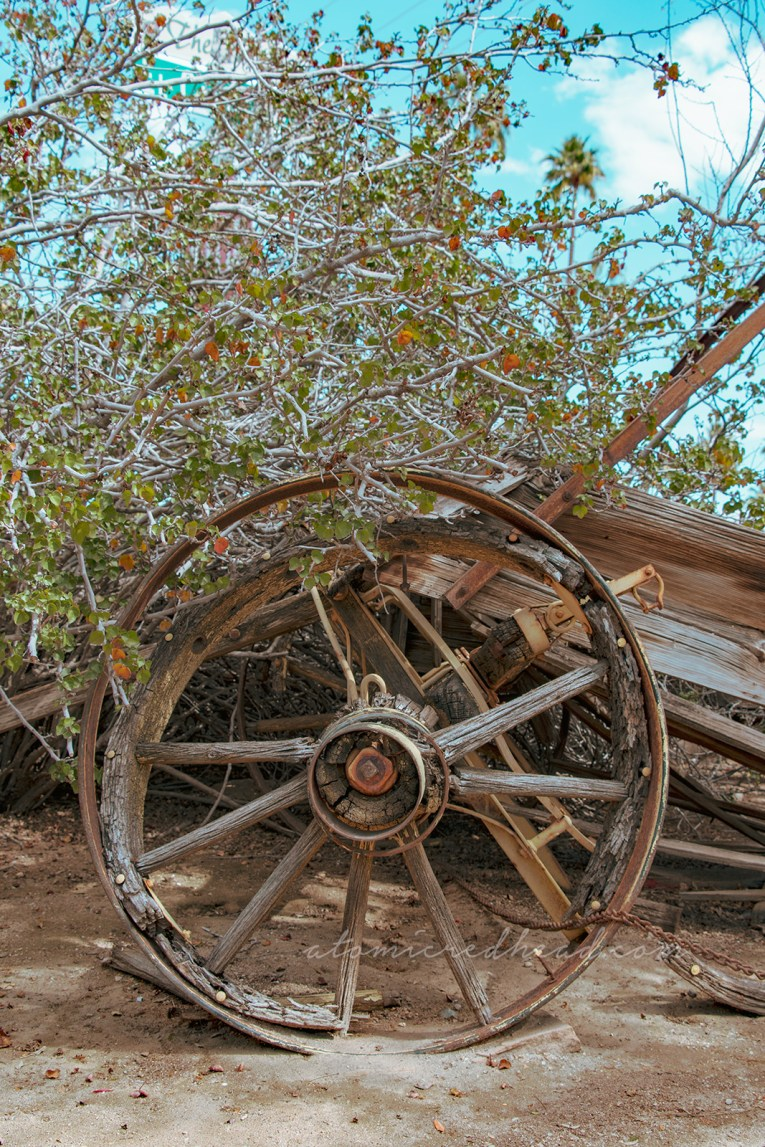 A broken down old wagon sits along cacti.
