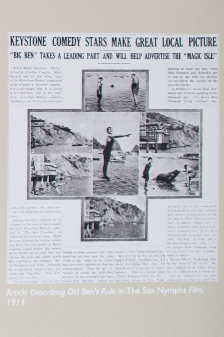 Photograph of an article about Old Ben in the Fatty Arbuckle movie, including a black and white image of Arbuckle feeding Old Ben.