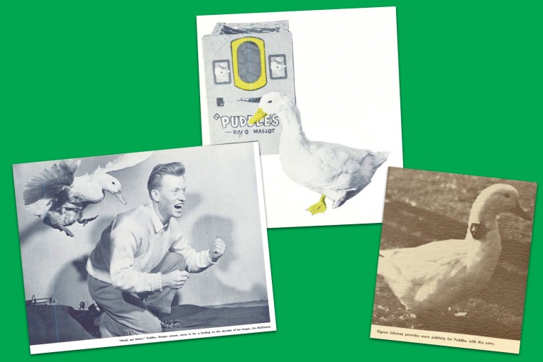 "Collage of three images, one of a duck coming in to land on a man's shoulder, another of a duck by a box reading ""Puddles U of O Mascot"" and another where he was photographed for a photo contest."