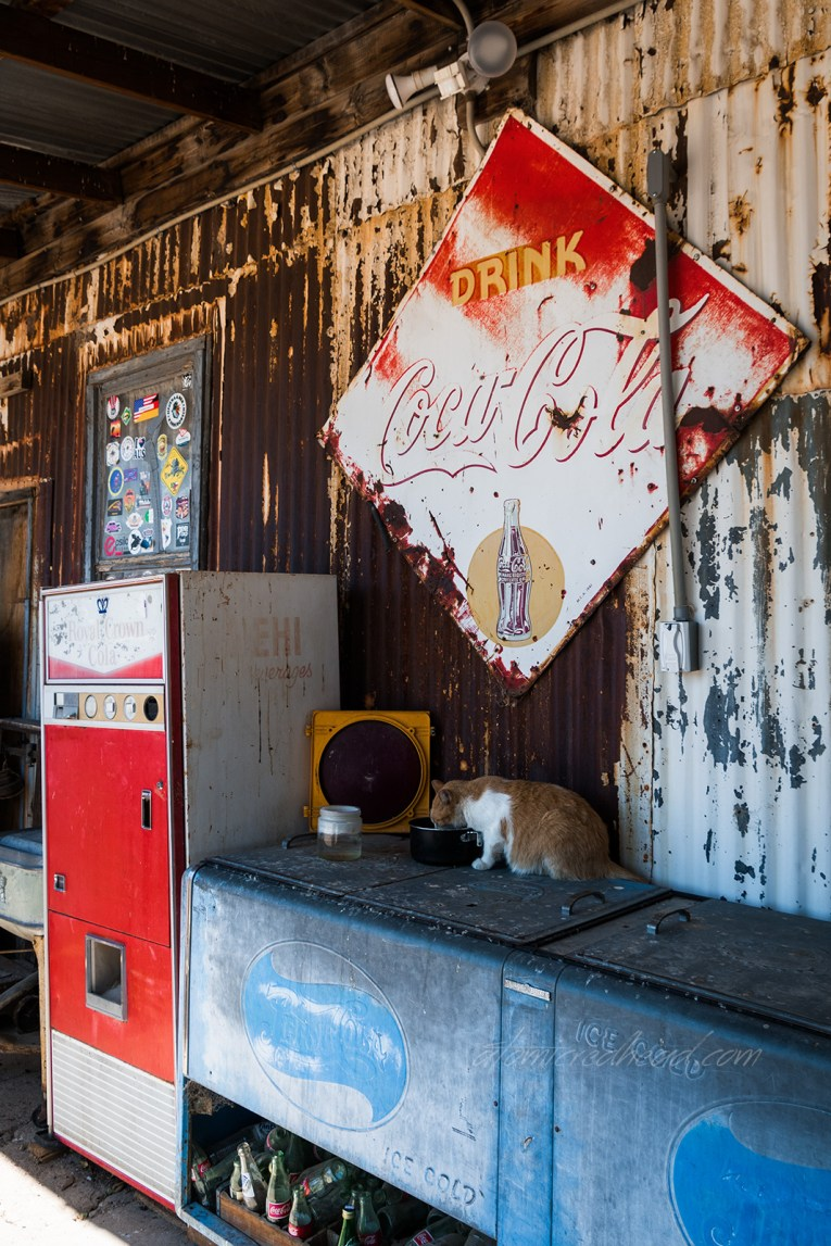 An orange and white cat eats from a food bowl atop an old Pepsi cooler. A faded Coca-Cola sign is hung on corrugated metal above. A faded red and white Royal Crown Cola vending machine is on the far left.