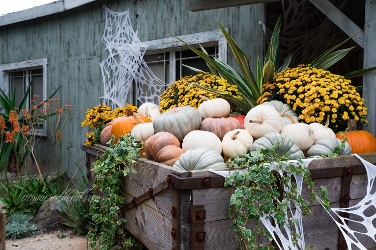 A mine car is loaded with pumpkins, both orange and white, and covered in cobwebs.