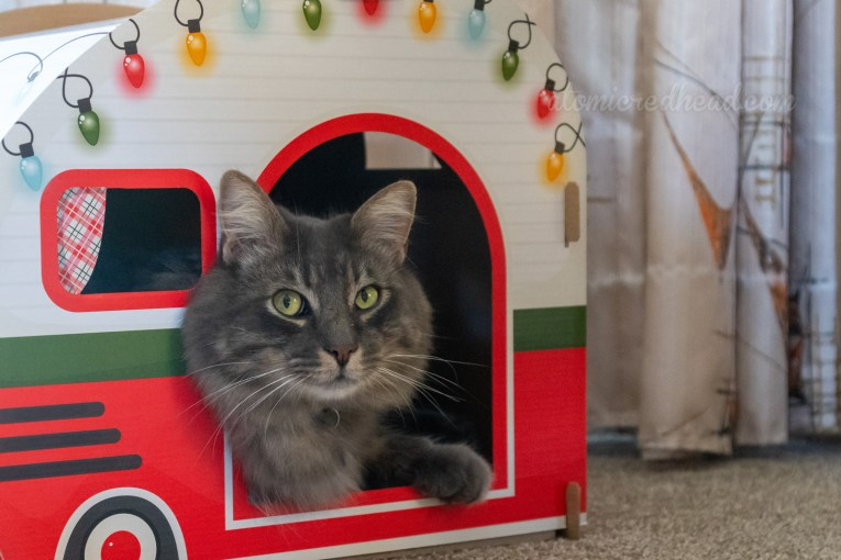 Our grey cat, Colonel Whiskers sits inside a vintage looking cardboard trailer with Christmas lights.