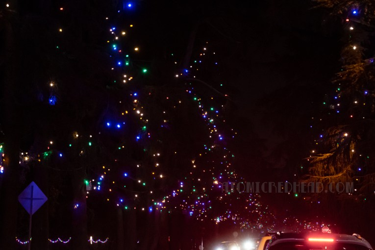 Massive trees edge a street and are decorated multi-colored lights.