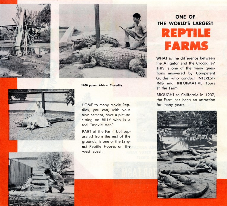 """Brochure from the California Alligator Farm, featuring black and white photos of gators going down a slide, sitting near pools, and a woman in a dress sitting atop one. Text reads """"One of the World's Largest Reptile Farms. WHAT is the difference between the Alligator and the Crocodile? THIS is one of the many questions answered by Competent Guides who conduct INTERESTING and INFORMATIVE Tours at the Farm. BROUGHT to California in 1907, the Farm has been an attraction for many years. 1400 pound African Crocodile. HOME to many movie Reptiles, you can, with your own camera, have a picture sitting on BILLY who is a real 'movie star.' PART of the Farm, but separated from the rest of the grounds, is one of the Largest Reptile Houses on the west coast."""""""