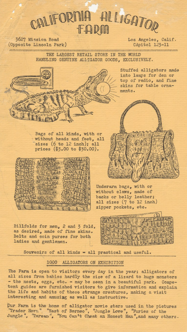 """Flyer for the California Alligator Farm, reads """"California Alligator Farm 3627 Mission Road (Opposite Lincoln Park) Los Angeles, Calif. CApital 123-11 THE LARGEST RETAIL STORE IN THE WORLD HANDLING GENUINE ALLIGATOR GOODS, EXCLUSIVELY. Stuffed alligators made into lamps for den or top of radio, and fine skins for table ornaments."""" illustration of a stuffed gator with a lightbulb in its mouth. Bags of all kinds, with or without head and feet, all sizes (6 to 12 inch); all prices ($3.00 to $30.00)"""" Illustration of a purse featuring an alligator head and feet. """"Underarm bags, with or without claws, made of backs or belly leather; all sizes (7 to 13 inch) zipper pockets, etc."""" Illustration of a clutch style purse of alligator skin. """"Billfolds for men, 2 and 3 fold, as desired, ade of fine skins. Belts and coin purses for both ladies and gentlemen."""" Illustration of a gator skin wallet. Souvenirs of all kinds - all practical and useful. 1000 ALLIGATORS ON EXHIBITION The Farm is open to visitors every day of the year; alligators of all sizes from babies hardly the size of a lizard to huge monsters - the nests, eggs, etc. - may be seen in a beautiful park. Competent guides are furnished visitors to give information and explain the life and habits of these strange creatures, making a visit interesting and amusing as well as instructive. Our Farm is the home of alligator movie stars used in the pictures 'Trader Horn', 'Easter of Borneo', 'Jungle Love', 'Furies of the Jungle', 'Tarzan', 'You Can't Cheat an Honest Man,' and many others."""