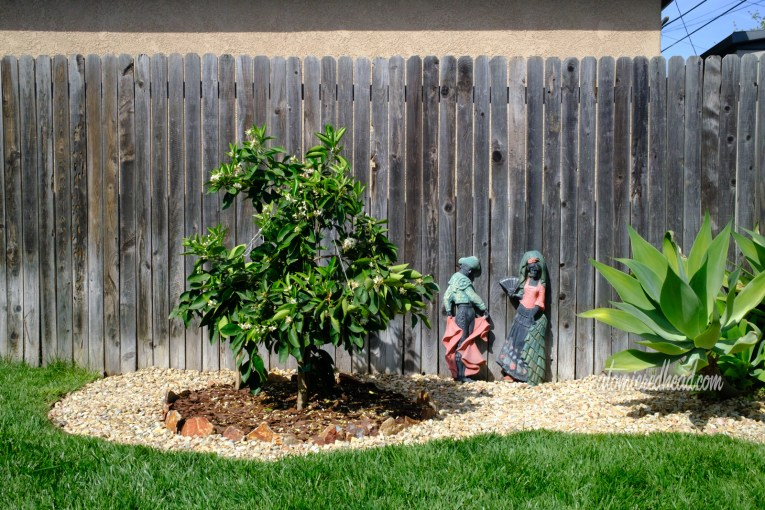 Our orange tree sits against a wooden fence, figures of a bull fighter and woman lean against the fence.