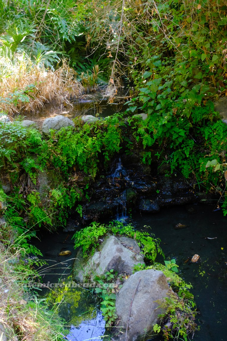 A small waterfall peeks from under hanging greenery.