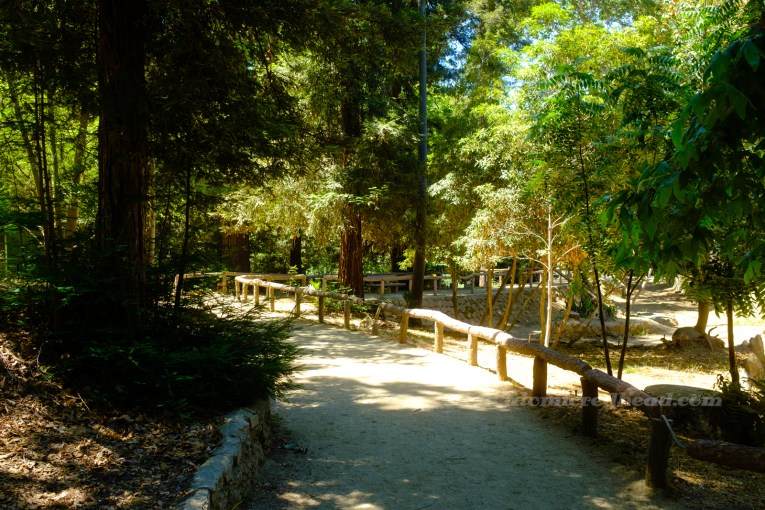 Tall trees provide shade over a pathway featuring faux wood railings.