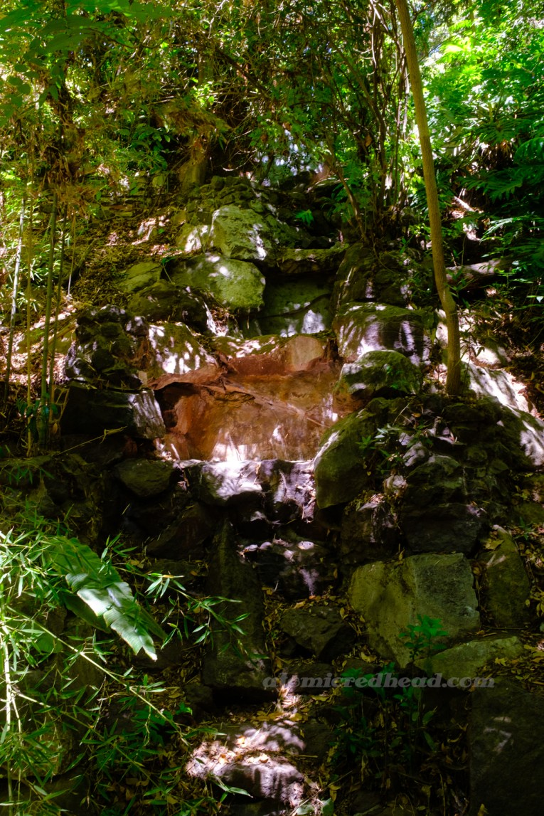 A small waterfall cascades over rocks that are surrounded by ferns.