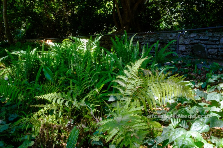 Lush ferns sprout up, giving Ferndell its name.