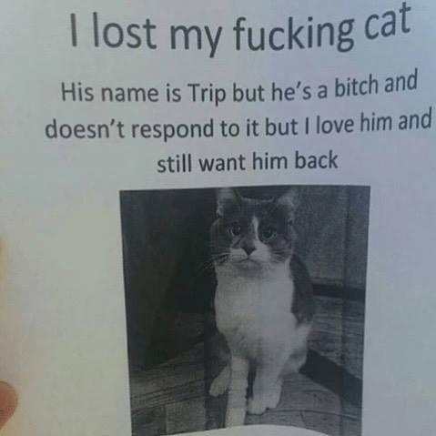 I lost my fucking cat