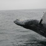 Who are Bitcoin whales? Research shows impact of BTC big traders