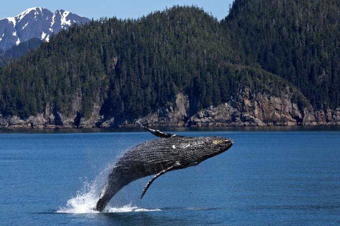 god's creation whale book of genesis atozmomm.com bsf