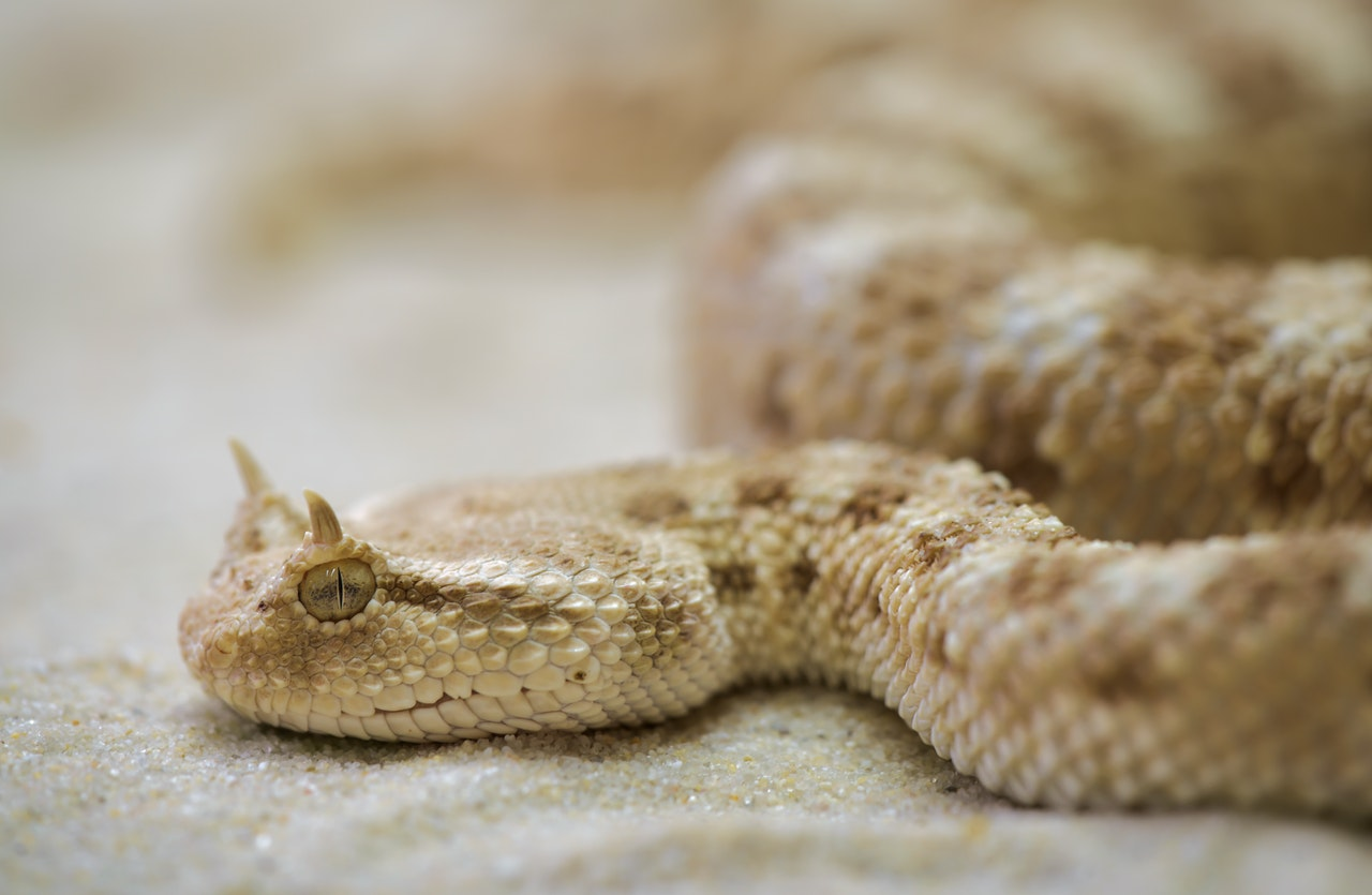 serpent/satan in the garden of eden www.atozmomm.com