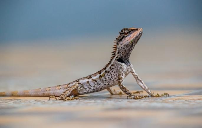 spotted lizard www.atozmomm.com