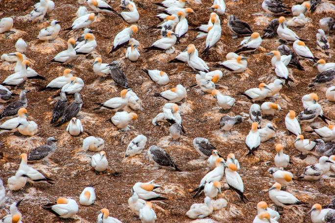 birds www.atozmomm.com