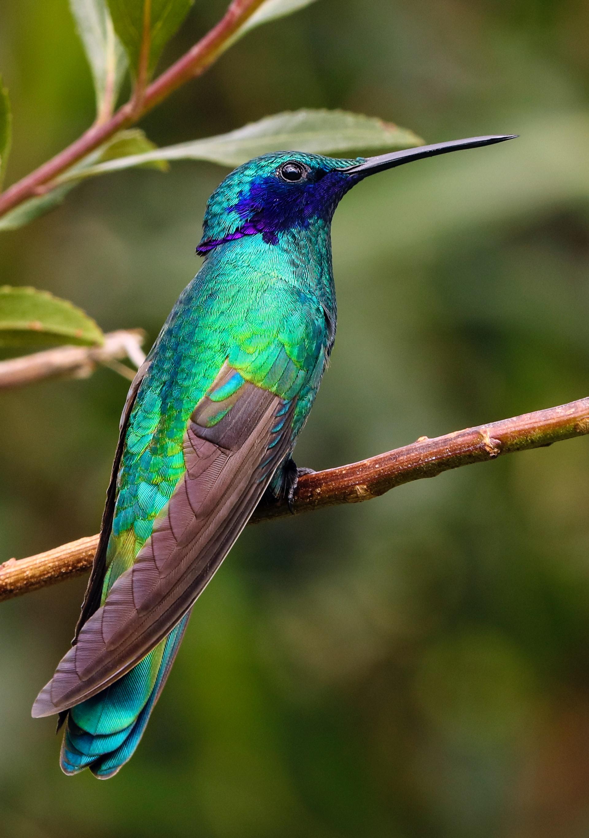 picture of hummingbird www.atozmomm.com