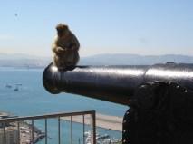 Gibraltar ape3