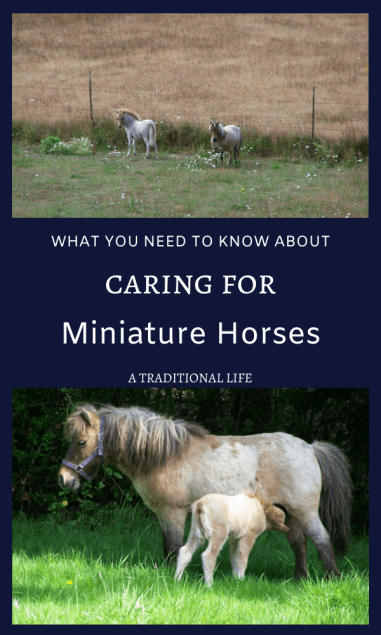 Learn to care for a miniature horse