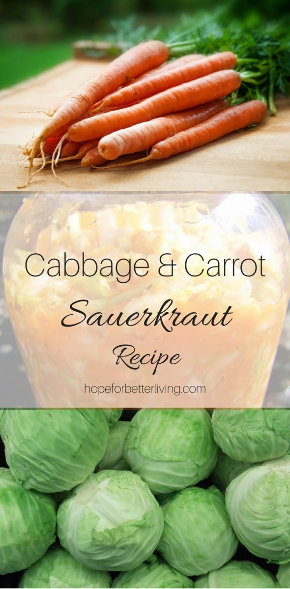 A garden recipe for fall sauerkraut, made from cabbages and carrots!